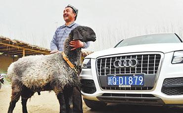 瓦格吉尔羊价格,瓦格吉尔羊为什么这么贵?