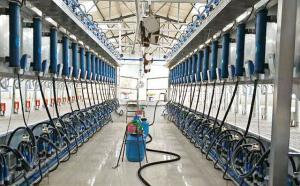 新东机械并列式自动脱杯奶牛挤奶机客户现场