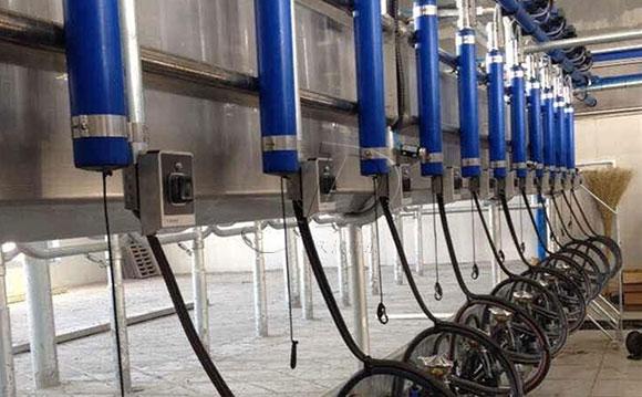 并列式奶牛挤奶机