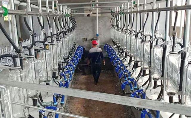 新东机械奶山羊挤奶厅辽宁丹东客户施工现场
