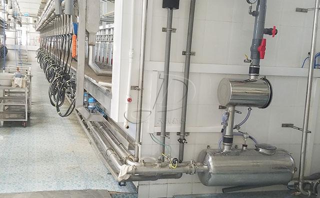 新東機械并列式牛奶擠奶廳客戶現場實拍