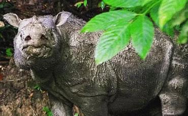 最后一只苏门答腊犀牛死亡,全球仅剩