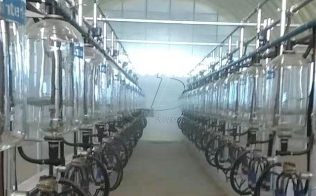 新疆32位鱼骨式计量瓶奶牛挤奶机安装调试完工