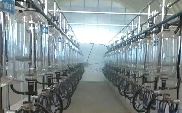 鱼骨式计量瓶奶牛挤奶机